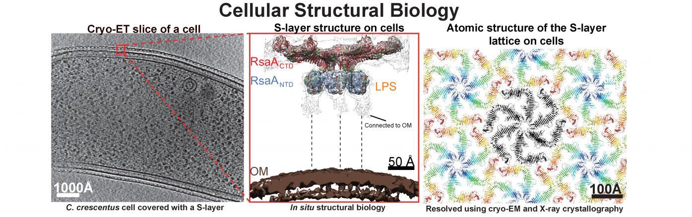 in situ structural biology